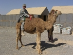 me-camel-3