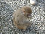 monkey-5