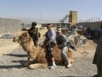 sgt-meyer-ssg-lovett-camel-1