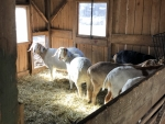 The Goat barn