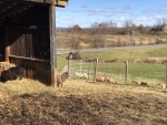 Sheep barn and pasture (close image)