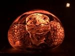 Tortoise pumpkin