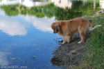 the-dog-is-better-at-fishing-than-i-am-this-was-all-proved-during-leave