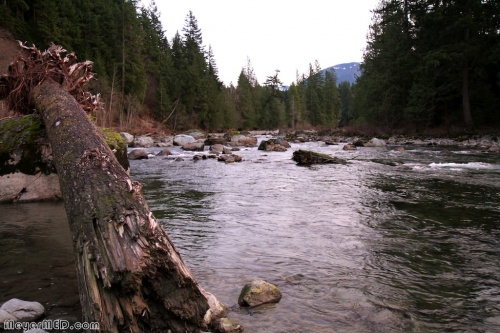 Driftwood on boulder in Snoqualmie River