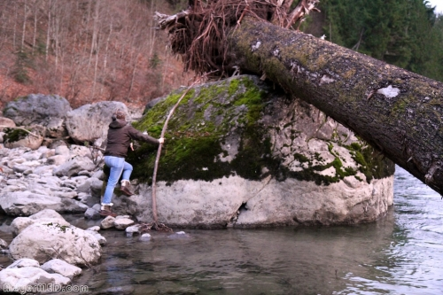 Driftwood on boulder in Snoqualmie River 2
